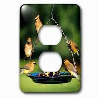 Jazzy Wallplates - Animals - Single Duplex Outlet With Cedar Waxwings On Grape Jelly Birdfeeder, Marion, Il